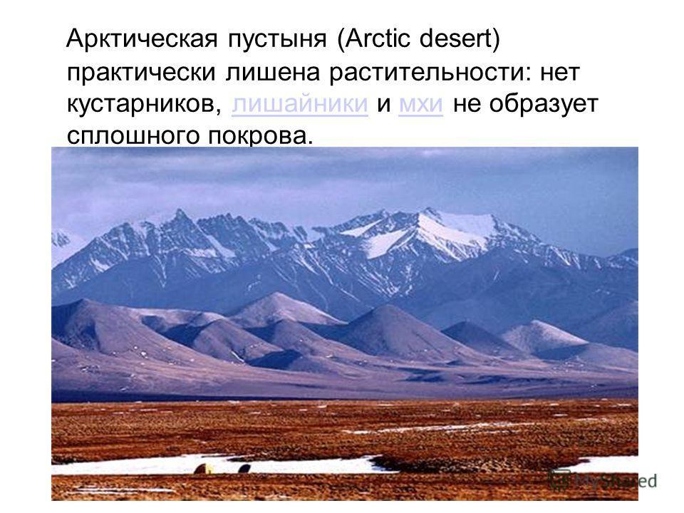 Арктическая пустыня (Arctic desert) практически лишена растительности: нет кустарников, лишайники и мхи не образует сплошного покрова.лишайникимхи