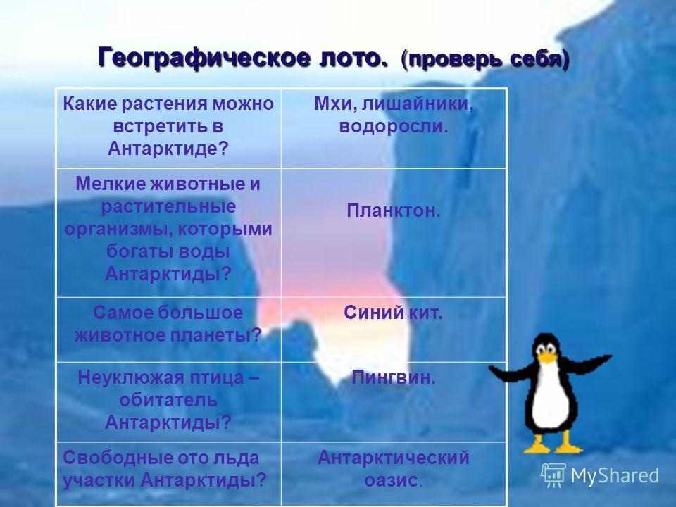 Географическое лото. (проверь себя) Какие растения можно встретить в Антарктиде? Мхи, лишайники, водоросли. Мелкие животные и растительные организмы, которыми богаты воды Антарктиды? Планктон. Самое большое животное планеты? Синий кит. Неуклюжая птиц