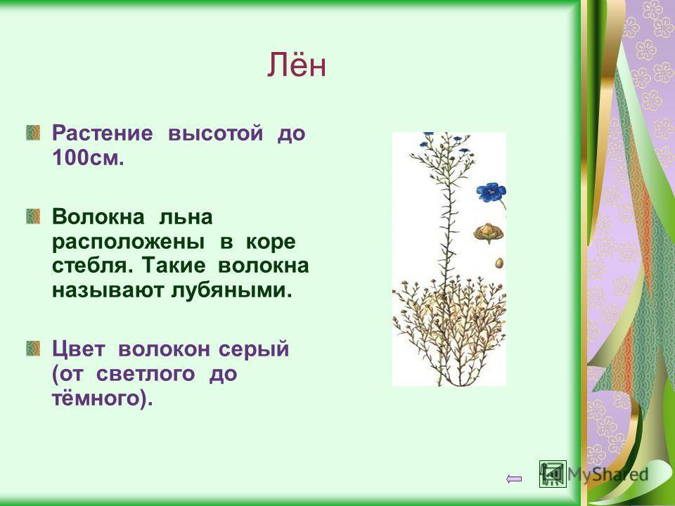 Лён Растение высотой до 100см. Волокна льна расположены в коре стебля. Такие волокна называют лубяными. Цвет волокон серый (от светлого до тёмного).