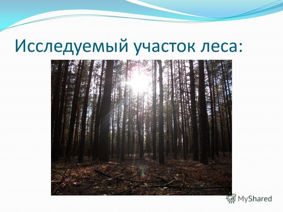 Исследуемый участок леса: