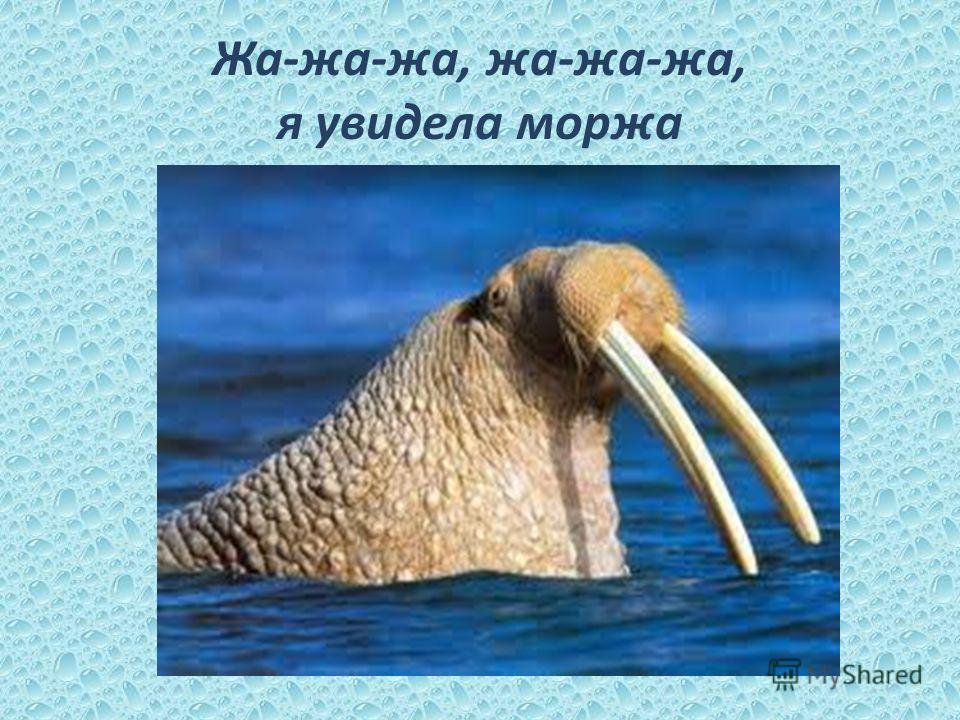 Жа-жа-жа, жа-жа-жа, я увидела моржа