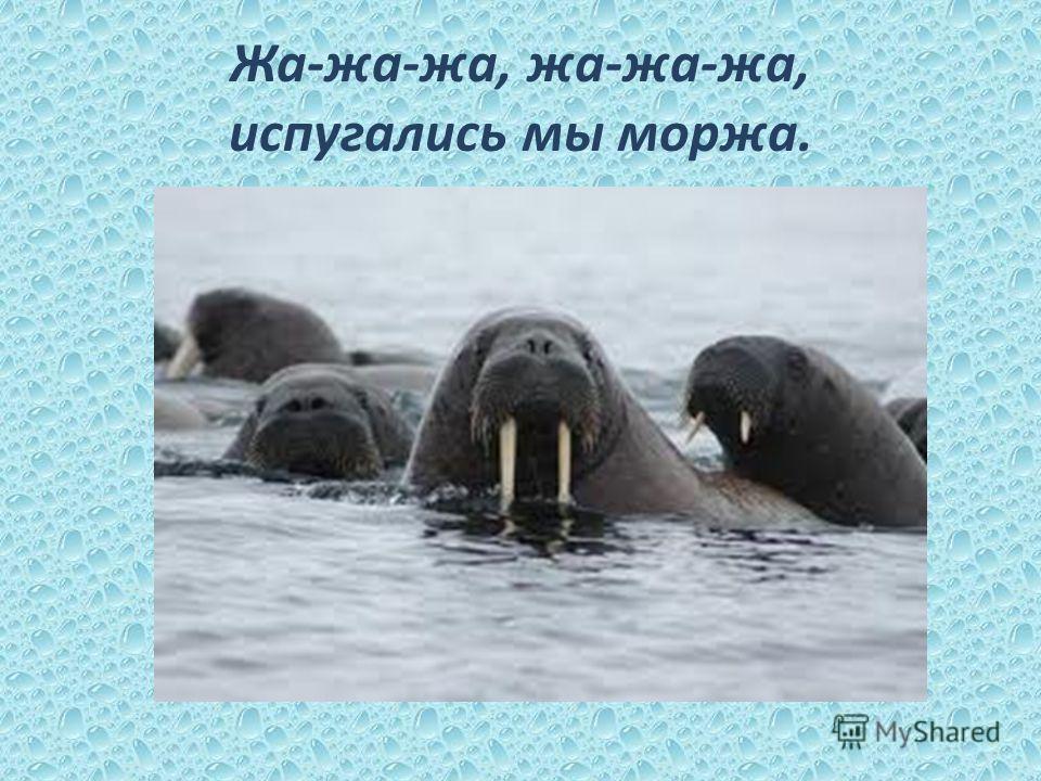 Жа-жа-жа, жа-жа-жа, испугались мы моржа.