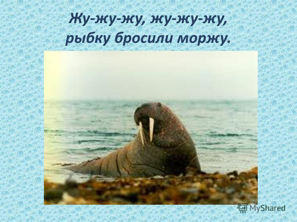 Жу-жу-жу, жу-жу-жу, рыбку бросили моржу.
