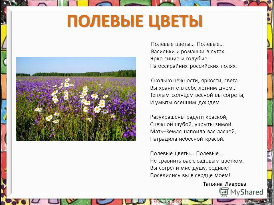 ПОЛЕВЫЕ ЦВЕТЫ Полевые цветы... Полевые... Васильки и ромашки в лугах... Ярко-синие и голубые – На бескрайних российских полях. Сколько нежности, яркости, света Вы храните в себе летним днем... Теплым солнцем весной вы согреты, И умыты осенним дождем.