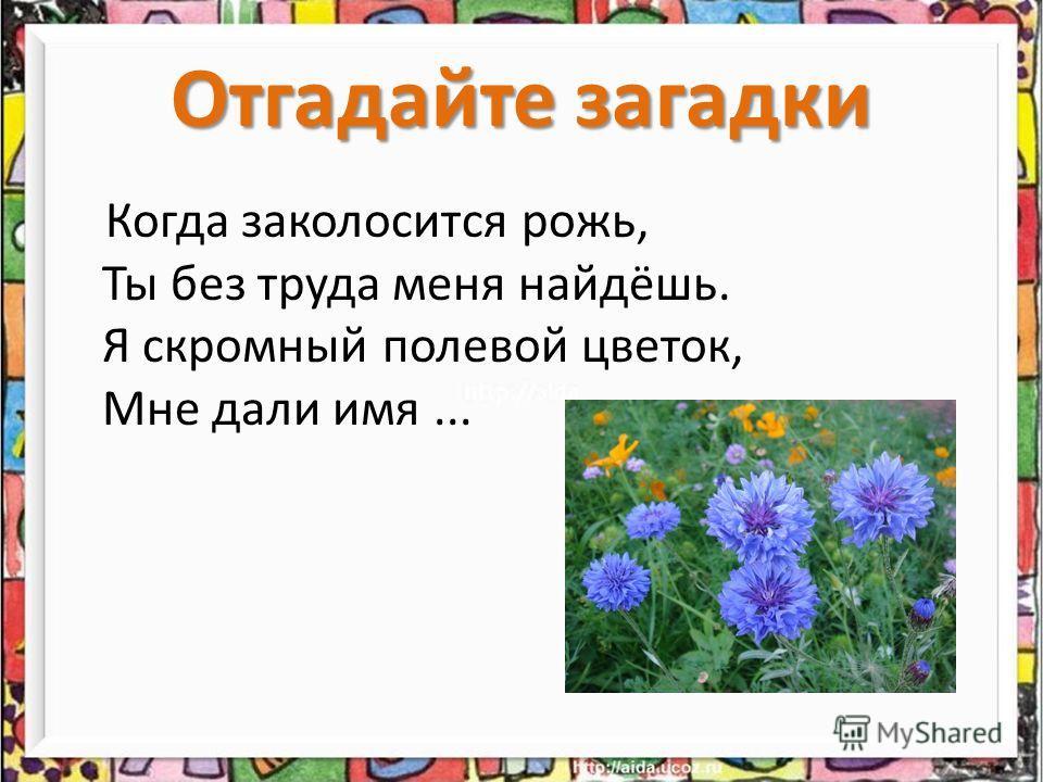 Когда заколосится рожь, Ты без труда меня найдёшь. Я скромный полевой цветок, Мне дали имя... Отгадайте загадки