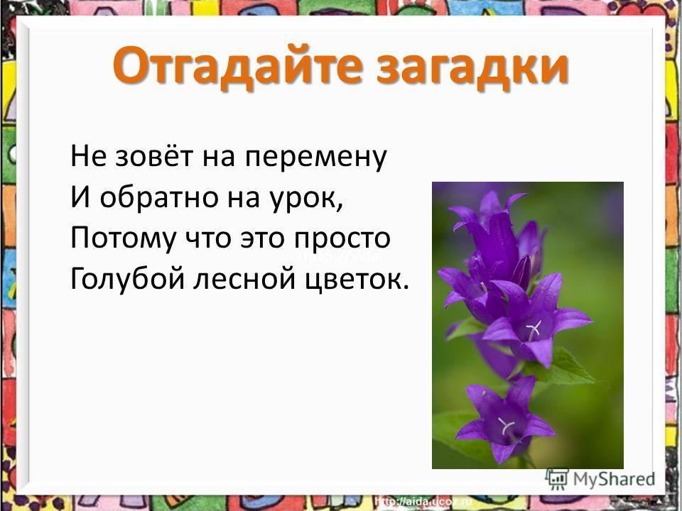 Отгадайте загадки Не зовёт на перемену И обратно на урок, Потому что это просто Голубой лесной цветок.
