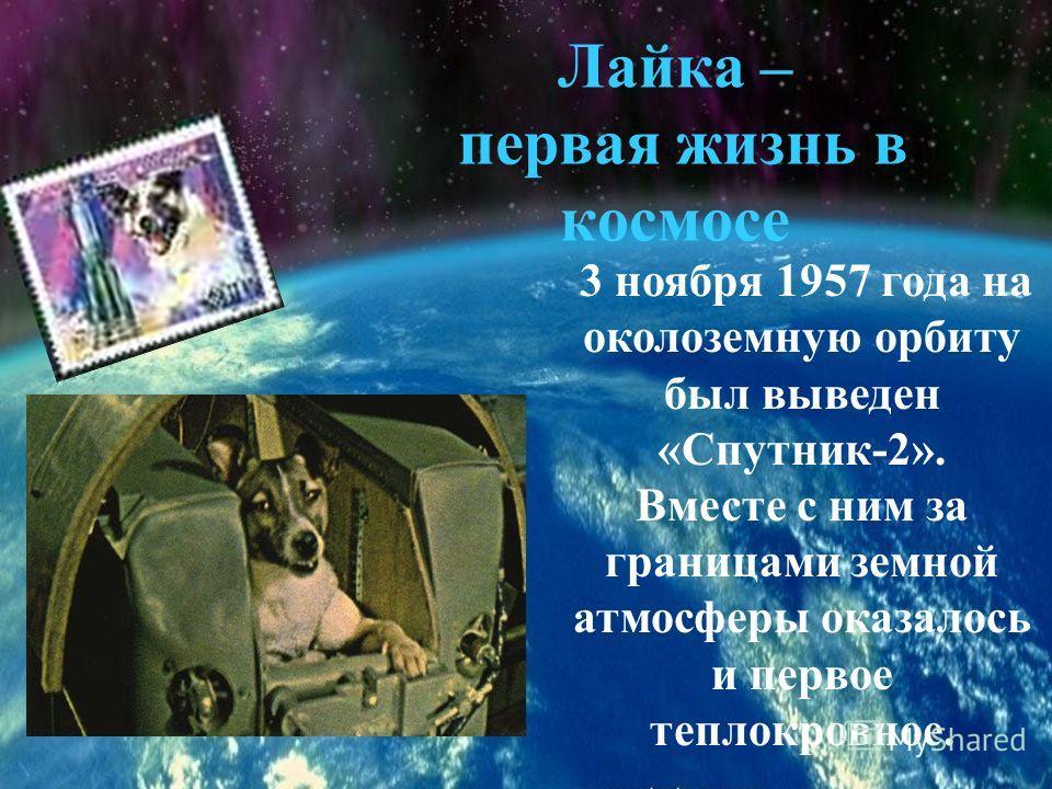 3 ноября 1957 года на околоземную орбиту был выведен «Спутник-2». Вместе с ним за границами земной атмосферы оказалось и первое теплокровное. Лайка – первая жизнь в космосе