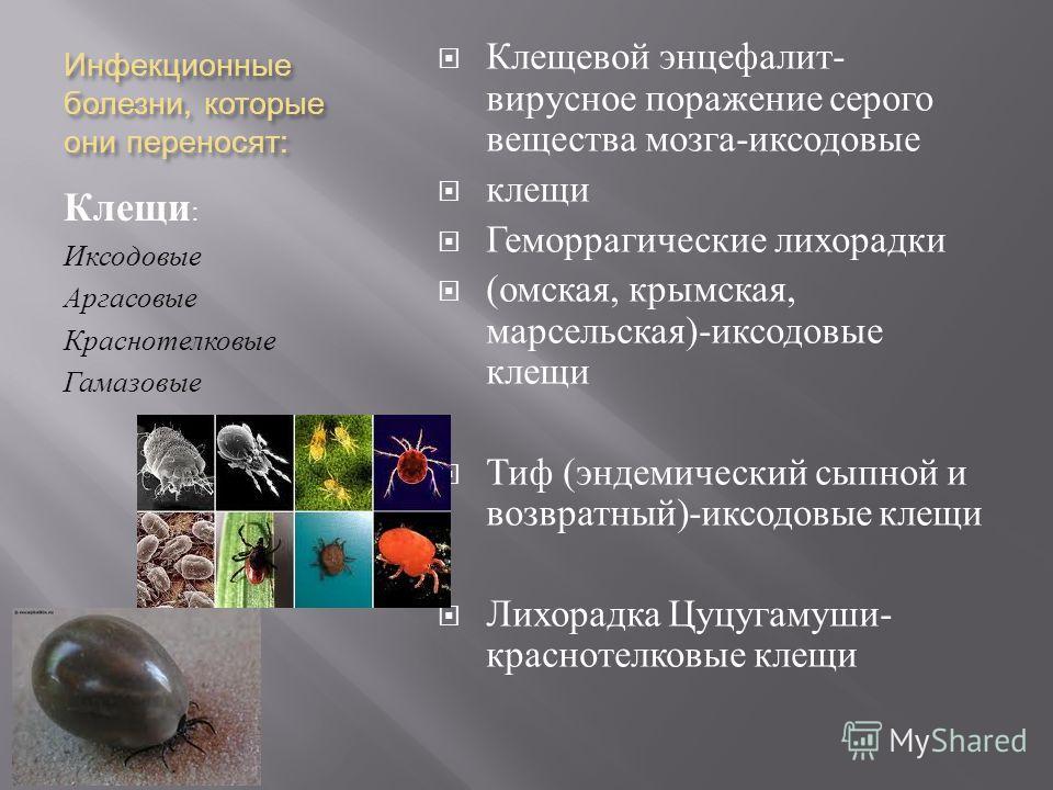 Инфекционные болезни, которые они переносят : Клещи : Иксодовые Аргасовые Краснотелковые Гамазовые Клещевой энцефалит - вирусное поражение серого вещества мозга - иксодовые клещи Геморрагические лихорадки ( омская, крымская, марсельская )- иксодовые