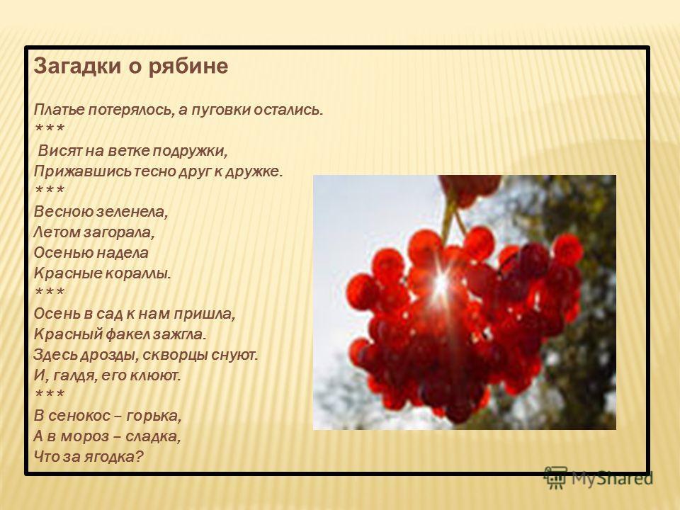 Загадки о рябине Платье потерялось, а пуговки остались. *** Висят на ветке подружки, Прижавшись тесно друг к дружке. *** Весною зеленела, Летом загорала, Осенью надела Красные кораллы. *** Осень в сад к нам пришла, Красный факел зажгла. Здесь дрозды,