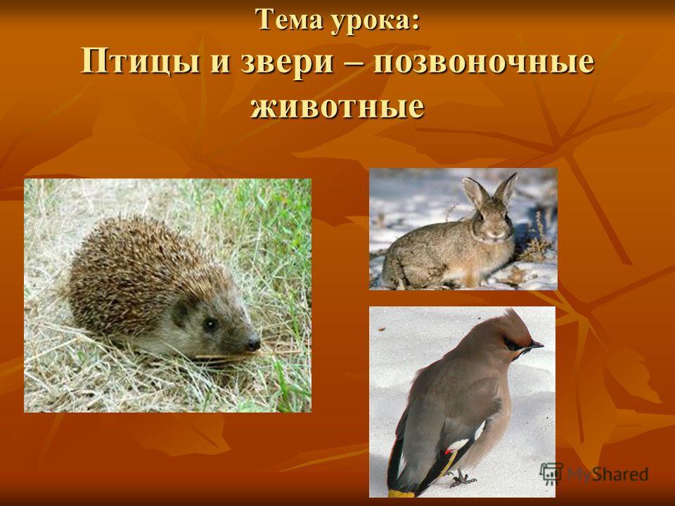Тема урока: Птицы и звери – позвоночные животные