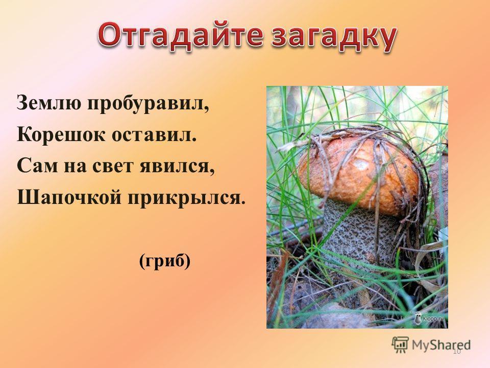 Землю пробуравил, Корешок оставил. Сам на свет явился, Шапочкой прикрылся. (гриб) 10
