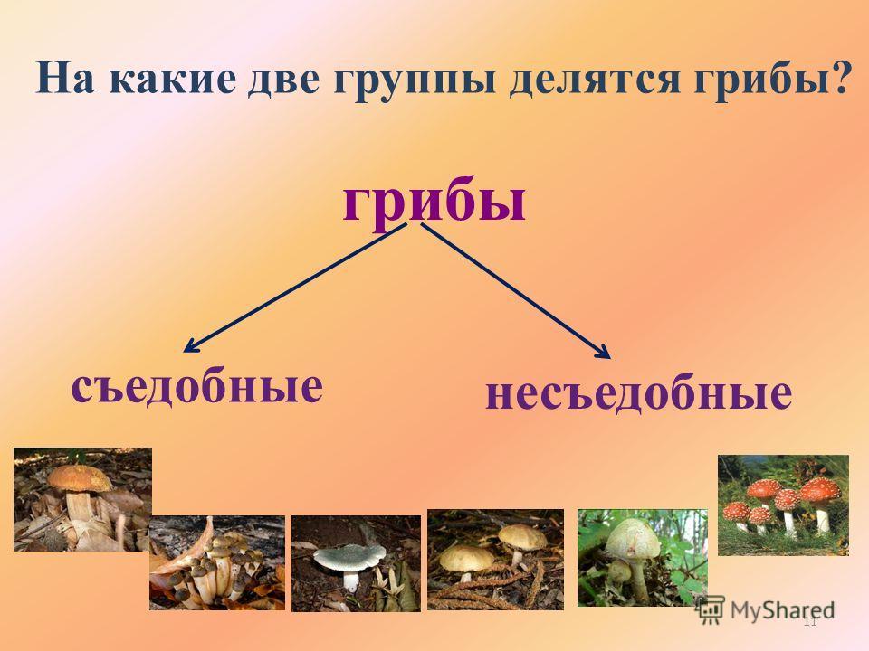 На какие две группы делятся грибы? грибы съедобные несъедобные 11