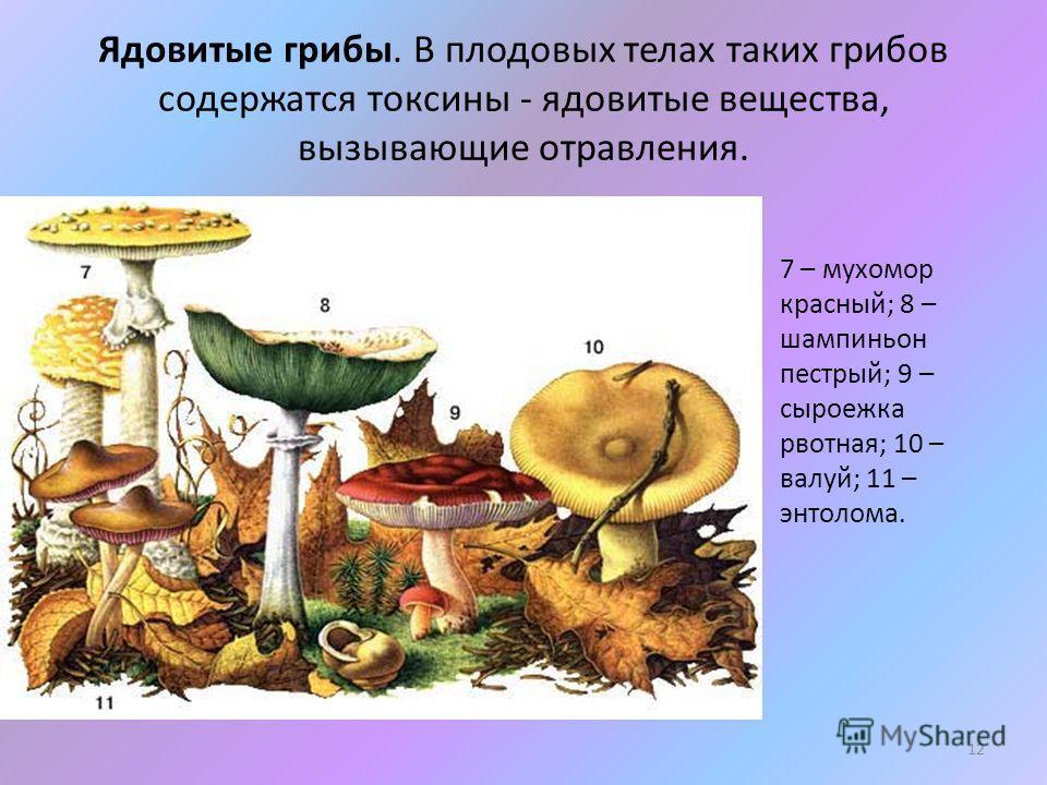 Ядовитые грибы. В плодовых телах таких грибов содержатся токсины - ядовитые вещества, вызывающие отравления. 7 – мухомор красный; 8 – шампиньон пестрый; 9 – сыроежка рвотная; 10 – валуй; 11 – энтолома. 12