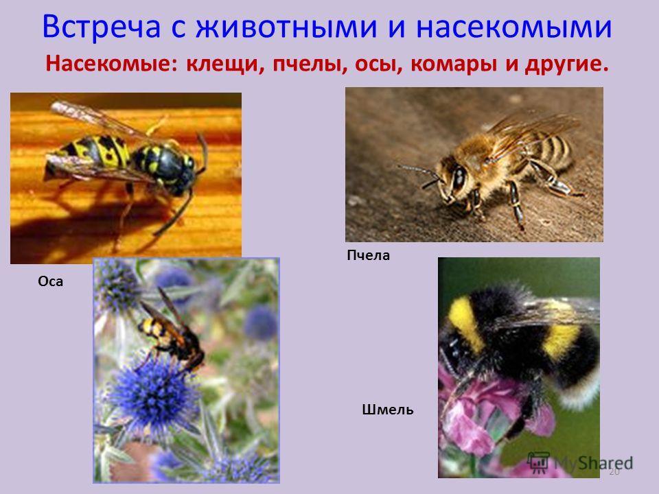 Встреча с животными и насекомыми Насекомые: клещи, пчелы, осы, комары и другие. Оса Пчела Шмель 20
