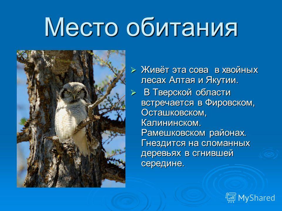 СОВА ЯСТРЕБИНАЯ Имеет небольшую голову, маленькие глаза, длинные острые крылья и длинный хвост, Она очень напоминает ястреба. Даже охотится ястребиная сова днём на мышей, землероек, птиц.