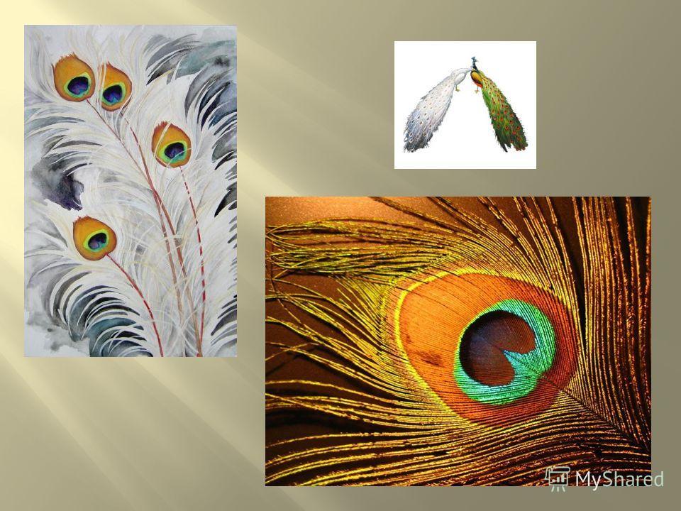 В 1963 году правительство Индии назвало индийского павлина, также носящего имя синего павлина, национальной птицей Индии Павлины широко известны как эмблема величия, королевских полномочий, духовного превосходства, идеального создания В Древнем Риме