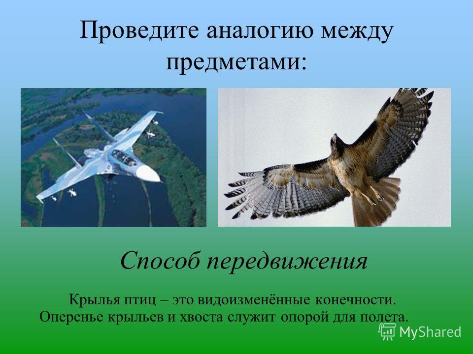 Проведите аналогию между предметами: Крылья птиц – это видоизменённые конечности. Оперенье крыльев и хвоста служит опорой для полета. Способ передвижения