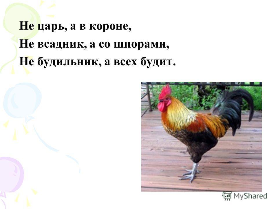 Прыг да скок, ну что за птица, Всё на месте не сидится. С виду нет его храбрей, Шустро скачет …