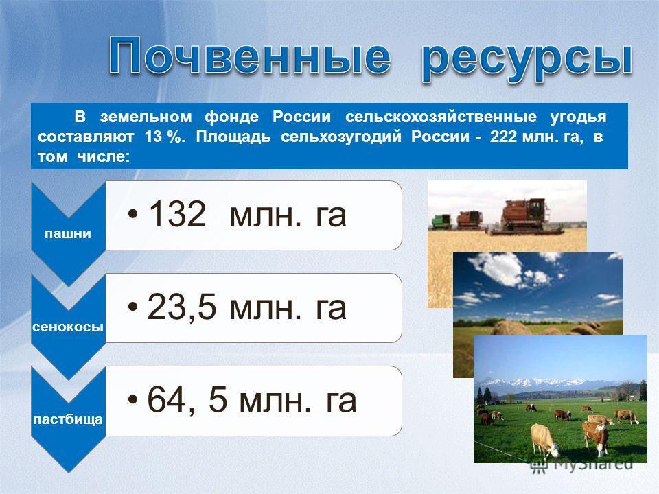 В земельном фонде России сельскохозяйственные угодья составляют 13 %. Площадь сельхозугодий России - 222 млн. га, в том числе: пашни 132 млн. га сенокосы 23,5 млн. га пастбища 64, 5 млн. га
