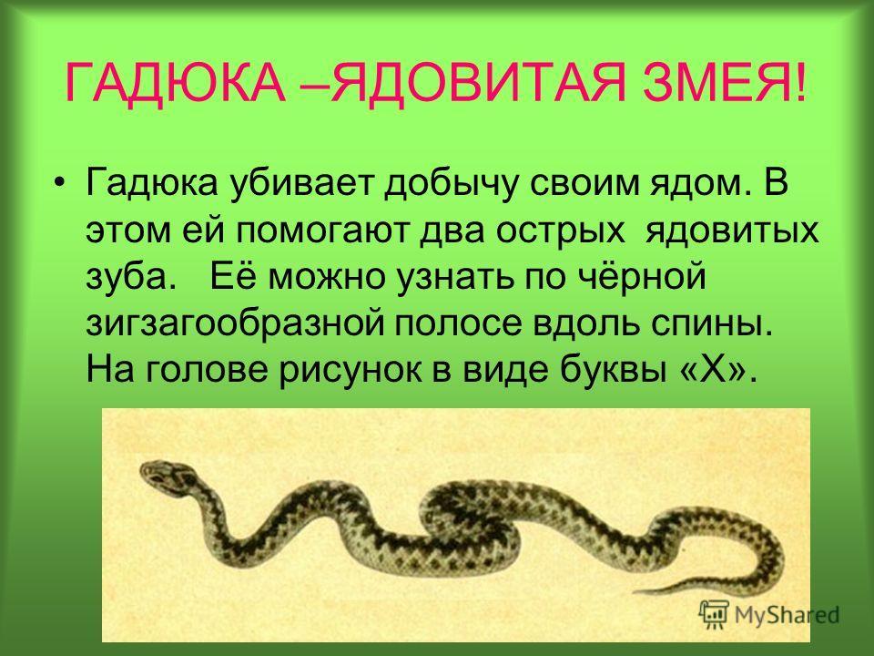 http://images.myshared.ru/6/603712/slide_13.jpg