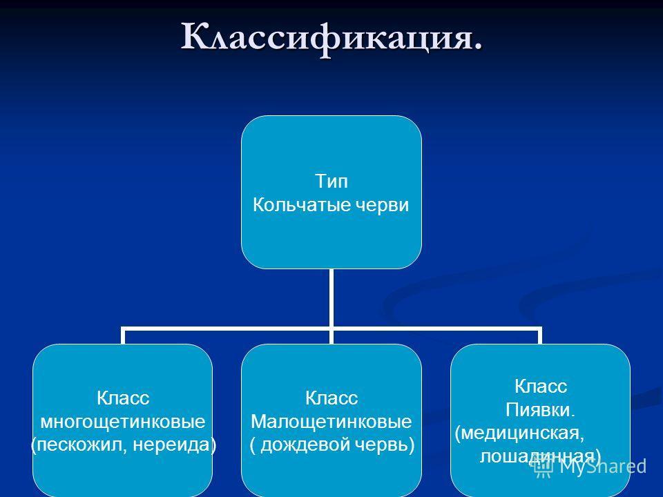 Классификация. Тип Кольчатые черви Класс многощетинковые (пескожил, нереида) Класс Малощетинковые ( дождевой червь) Класс Пиявки. (медицинская, лошадинная)