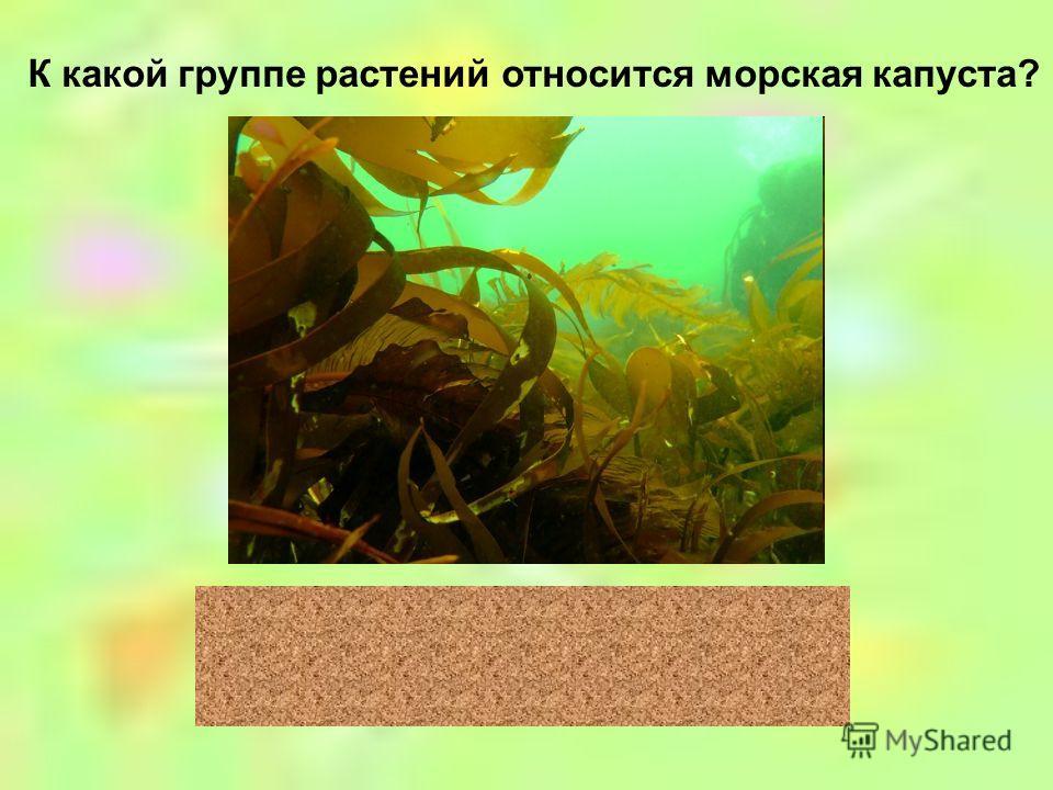 К какой группе растений относится лиственница? хвойные