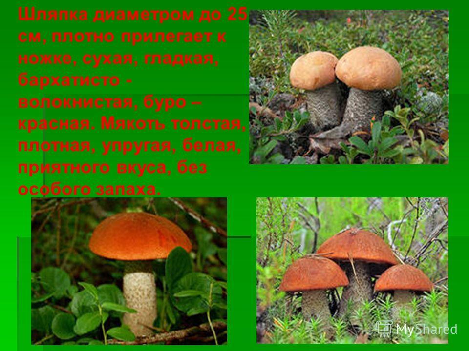 подосиновик Подосиновик красно – бурый. Другие названия: красноголовик, красная шапочка, красный гриб, осиновик.