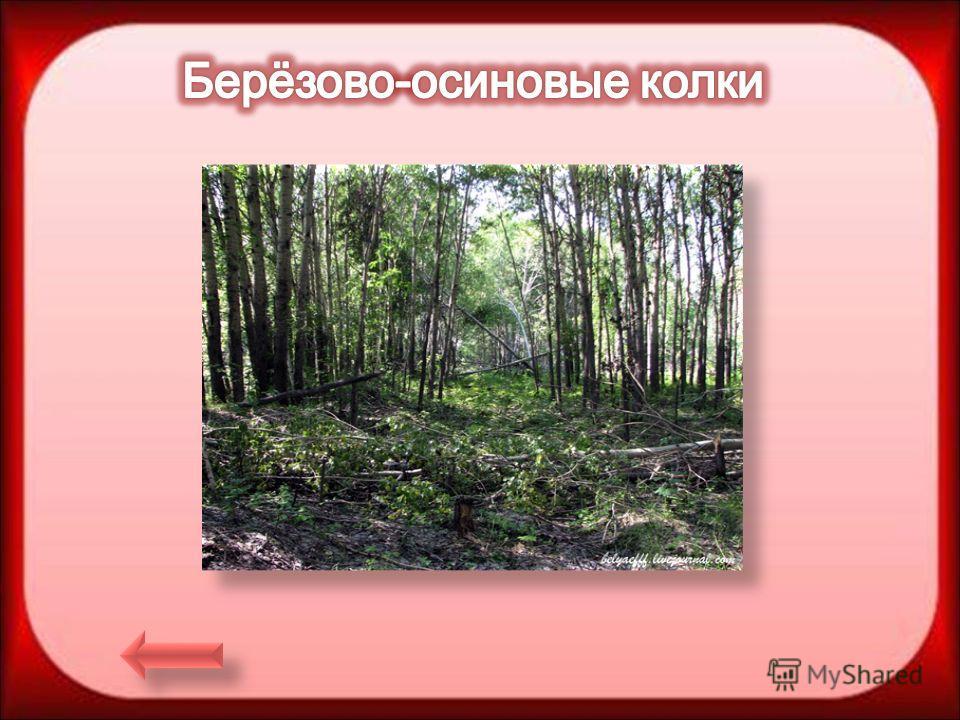 Назад Выход Сектор Растительность Как называются небольшие островки березово- осинового леса? Колки