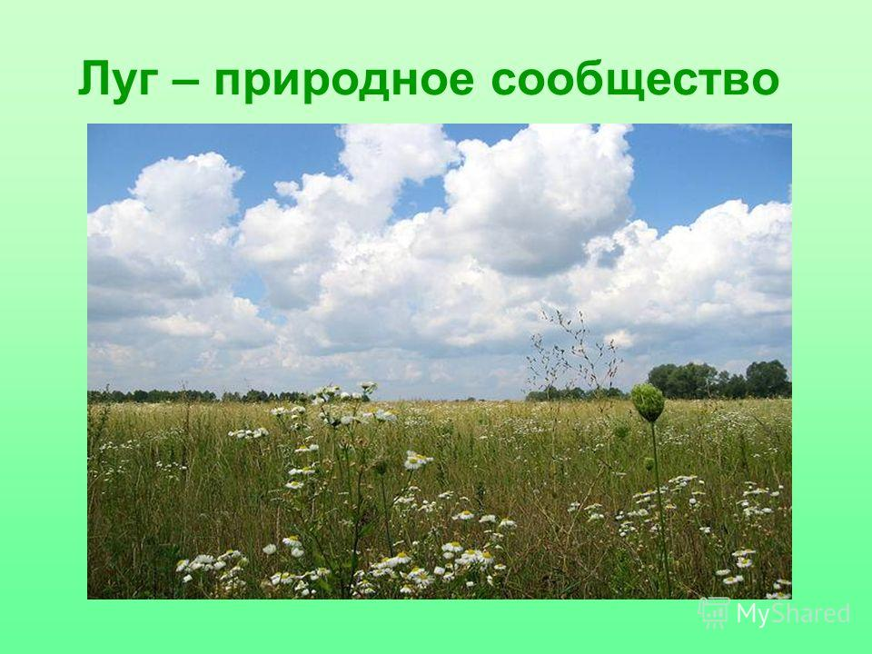 Луг – природное сообщество