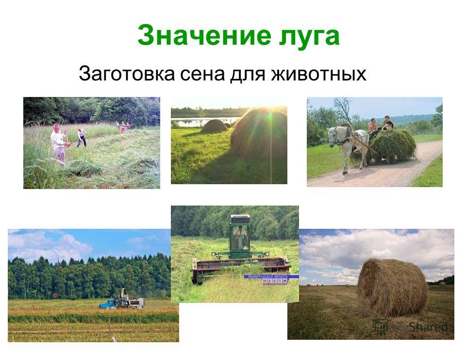 Значение луга Заготовка сена для животных