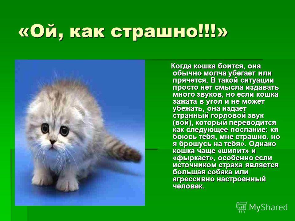 «Ой, как страшно!!!» Когда кошка боится, она обычно молча убегает или прячется. В такой ситуации просто нет смысла издавать много звуков, но если кошка зажата в угол и не может убежать, она издает странный горловой звук (вой), который переводится как
