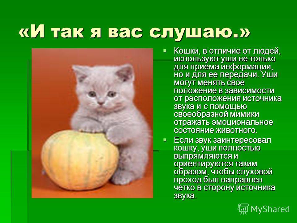 «И так я вас слушаю.» Кошки, в отличие от людей, используют уши не только для приема информации, но и для ее передачи. Уши могут менять свое положение в зависимости от расположения источника звука и с помощью своеобразной мимики отражать эмоционально
