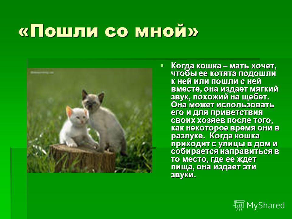 «Пошли со мной» Когда кошка – мать хочет, чтобы ее котята подошли к ней или пошли с ней вместе, она издает мягкий звук, похожий на щебет. Она может использовать его и для приветствия своих хозяев после того, как некоторое время они в разлуке. Когда к