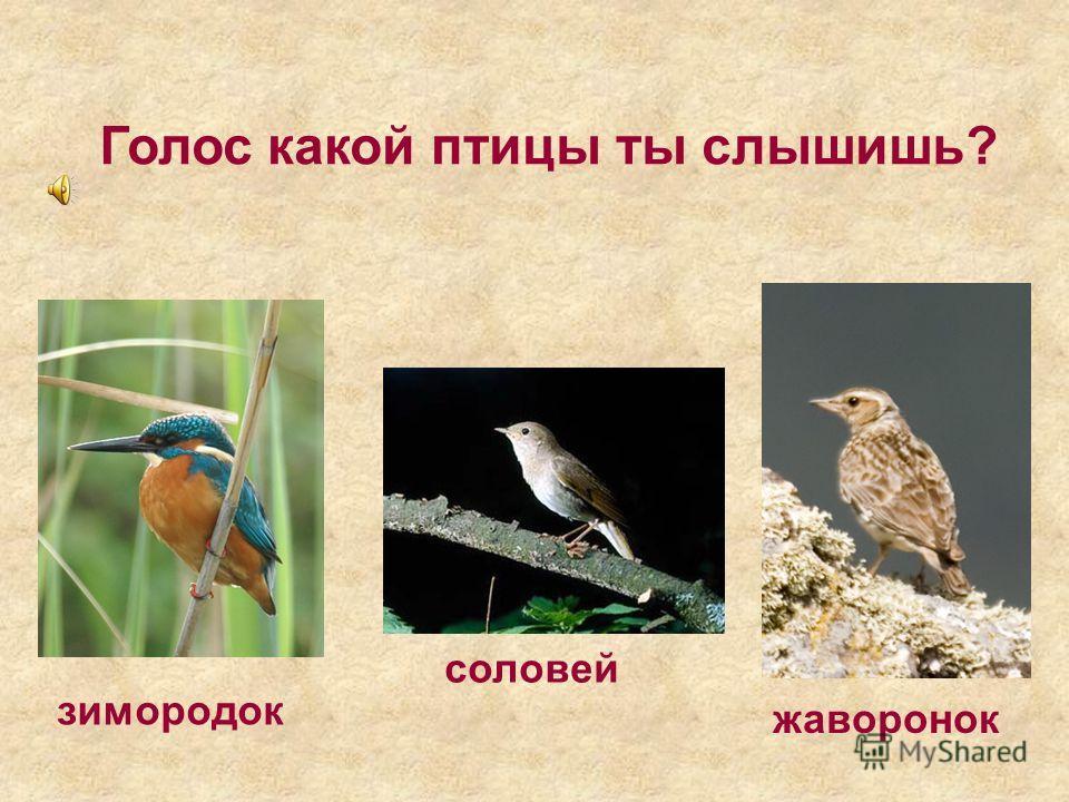 Голос какой птицы ты слышишь? жаворонок зимородок соловей