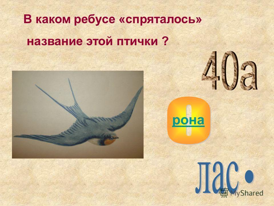 В каком ребусе «спряталось» название этой птички ? рона