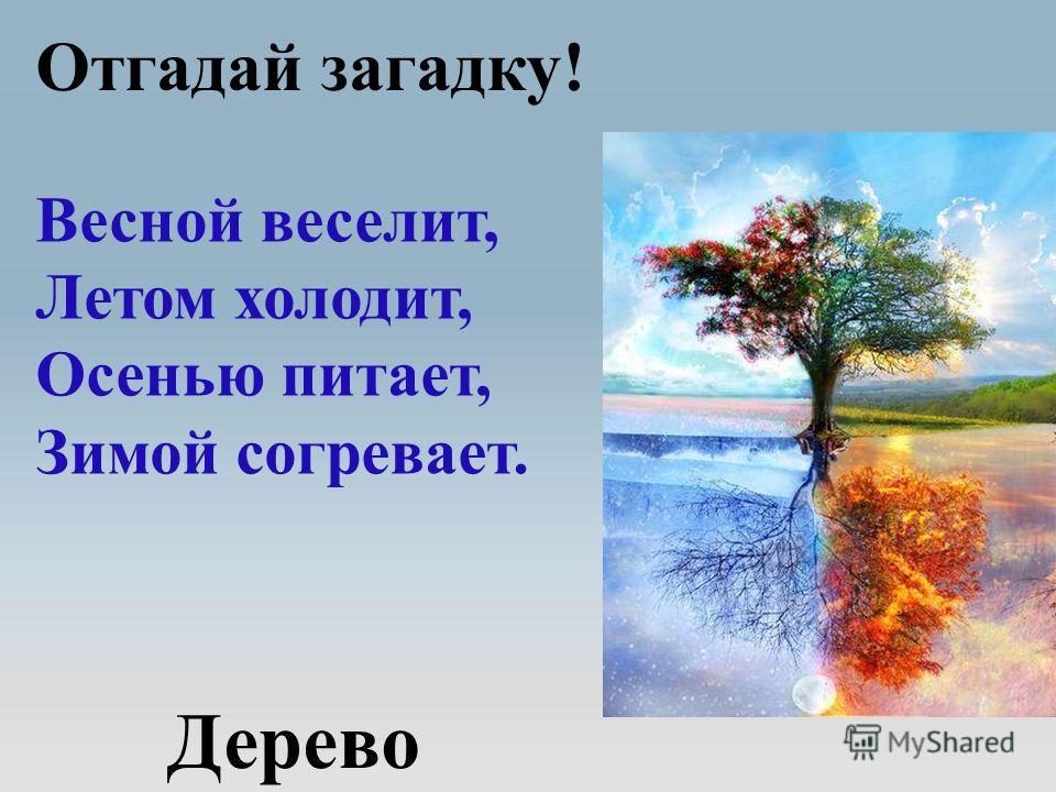 Дерево Отгадай загадку! Весной веселит, Летом холодит, Осенью питает, Зимой согревает.