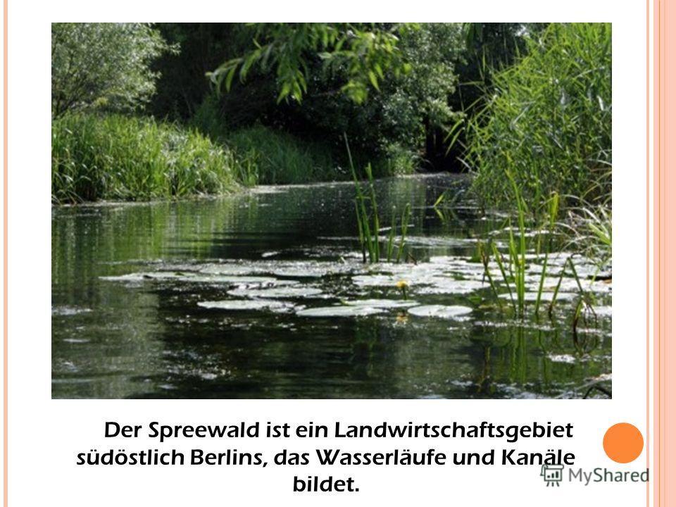Der Spreewald ist ein Landwirtschaftsgebiet südöstlich Berlins, das Wasserläufe und Kanäle bildet.