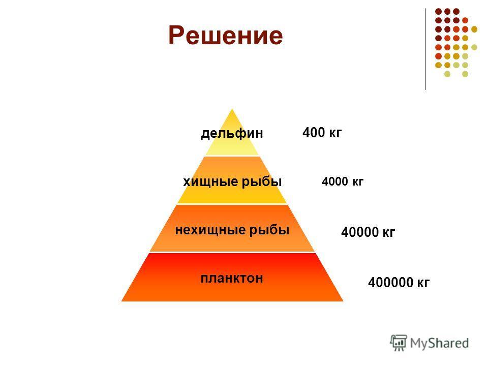 Решение дельфин хищные рыбы нехищные рыбы планктон 400 кг 4000 кг 40000 кг 400000 кг