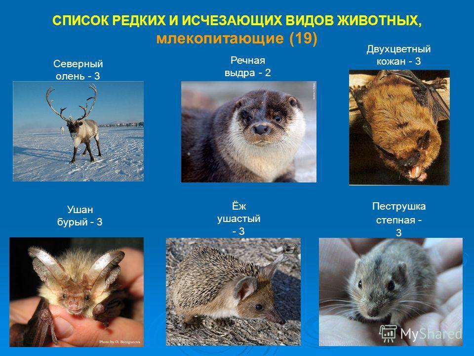 СПИСОК РЕДКИХ И ИСЧЕЗАЮЩИХ ВИДОВ ЖИВОТНЫХ, млекопитающие (19) Северный олень - 3 Речная выдра - 2 Двухцветный кожан - 3 Ушан бурый - 3 Ёж ушастый - 3 Пеструшка степная - 3