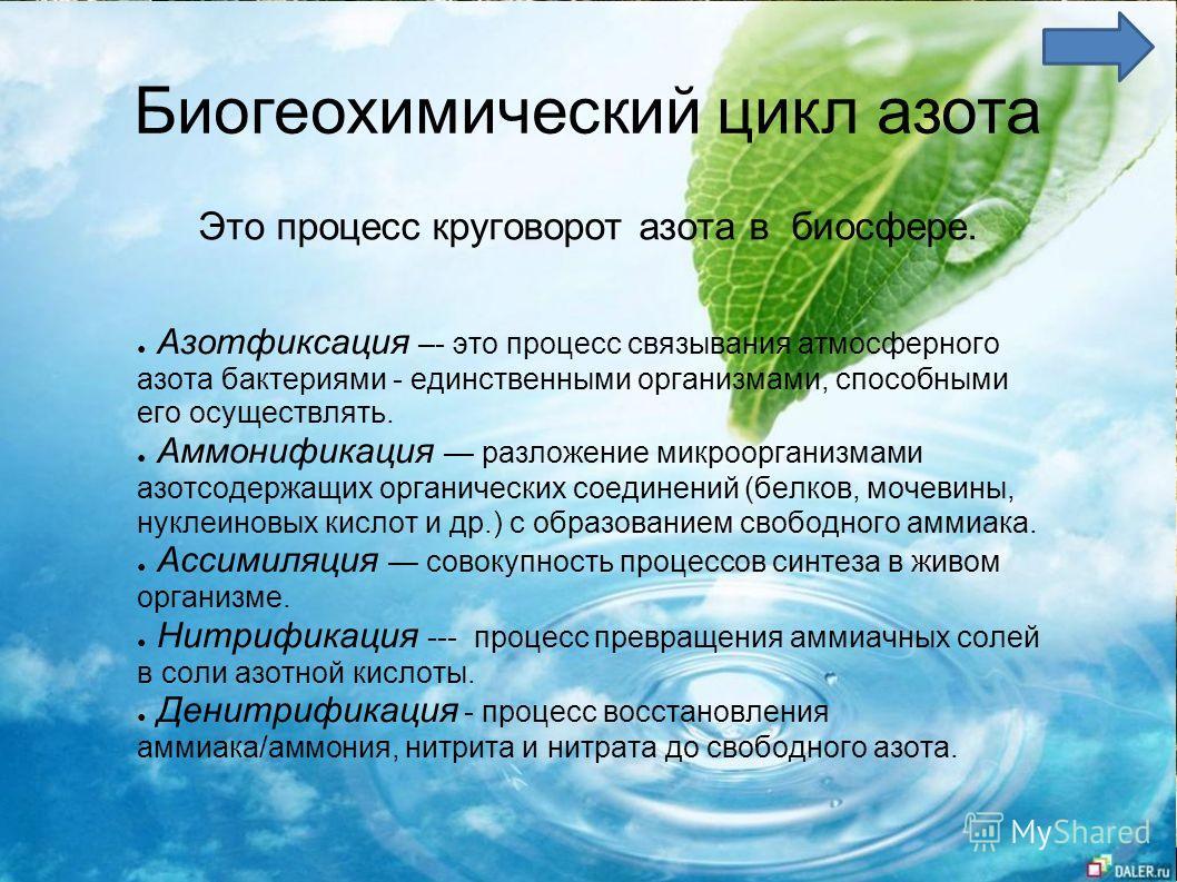 Биогеохимический цикл азота Азотфиксация –- это процесс связывания атмосферного азота бактериями - единственными организмами, способными его осуществлять. Аммонификация разложение микроорганизмами азотсодержащих органических соединений (белков, мочев