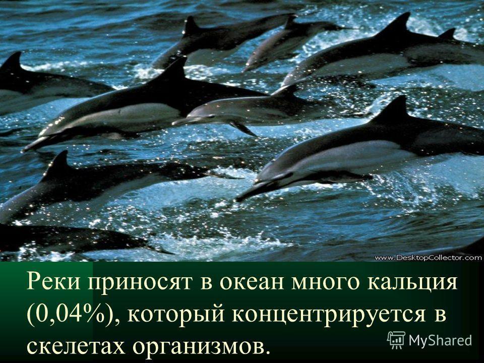Реки приносят в океан много кальция (0,04%), который концентрируется в скелетах организмов.