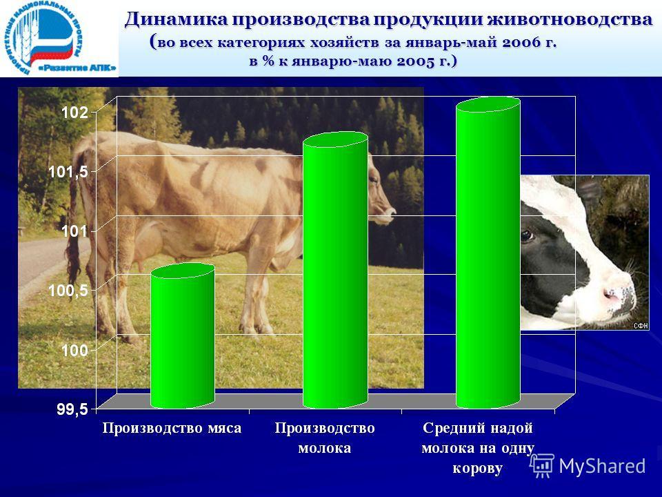 Динамика производства продукции животноводства ( во всех категориях хозяйств за январь-май 2006 г. в % к январю-маю 2005 г.)