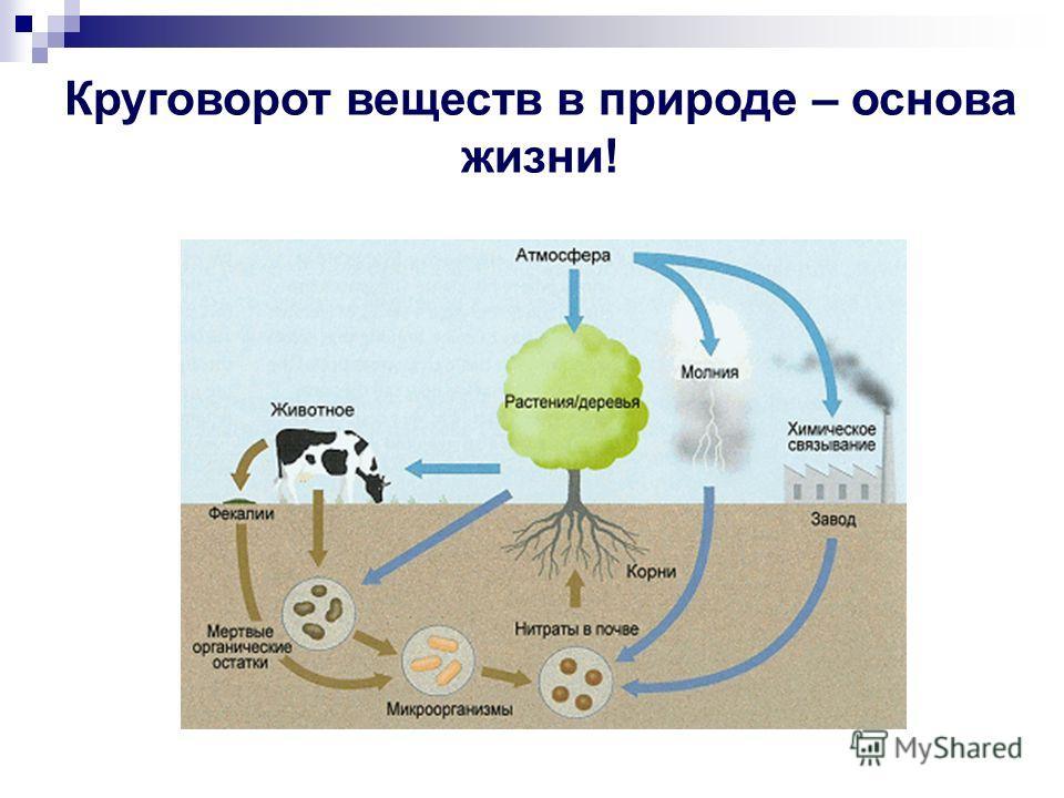 Круговорот веществ в природе – основа жизни!