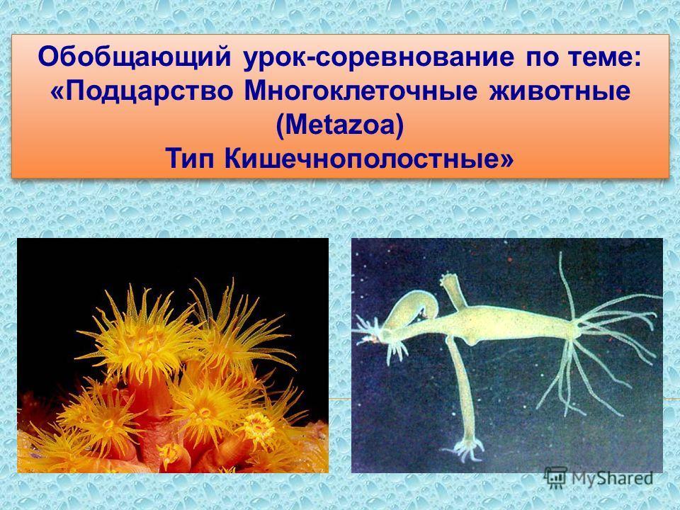 Обобщающий урок-соревнование по теме: «Подцарство Многоклеточные животные (Меtazoa) Тип Кишечнополостные» Обобщающий урок-соревнование по теме: «Подцарство Многоклеточные животные (Меtazoa) Тип Кишечнополостные»
