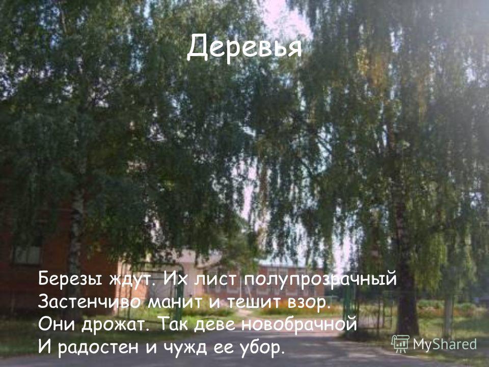 Деревья Березы ждут. Их лист полупрозрачный Застенчиво манит и тешит взор. Они дрожат. Так деве новобрачной И радостен и чужд ее убор.