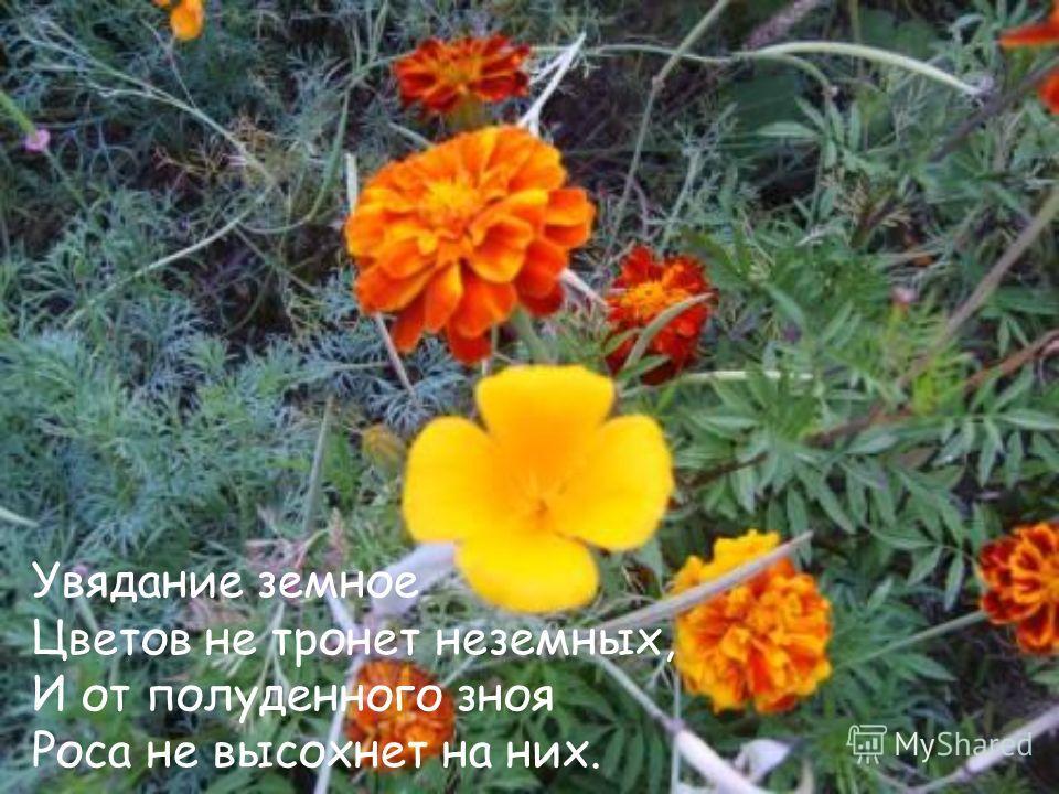 Увядание земное Цветов не тронет неземных, И от полуденного зноя Роса не высохнет на них.