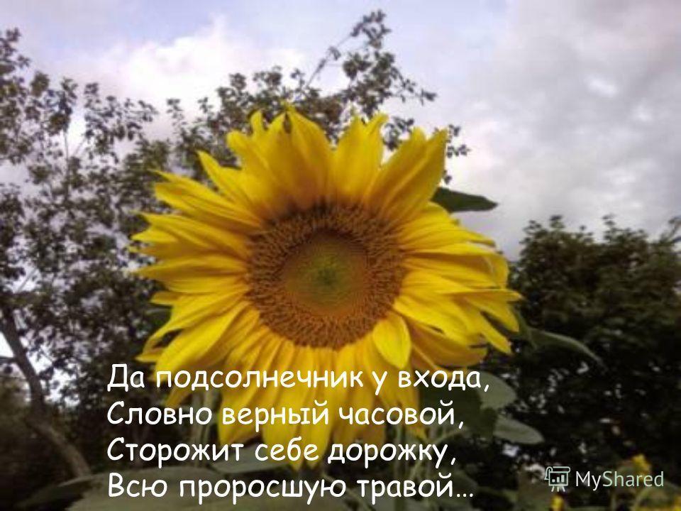 Да подсолнечник у входа, Словно верный часовой, Сторожит себе дорожку, Всю проросшую травой…
