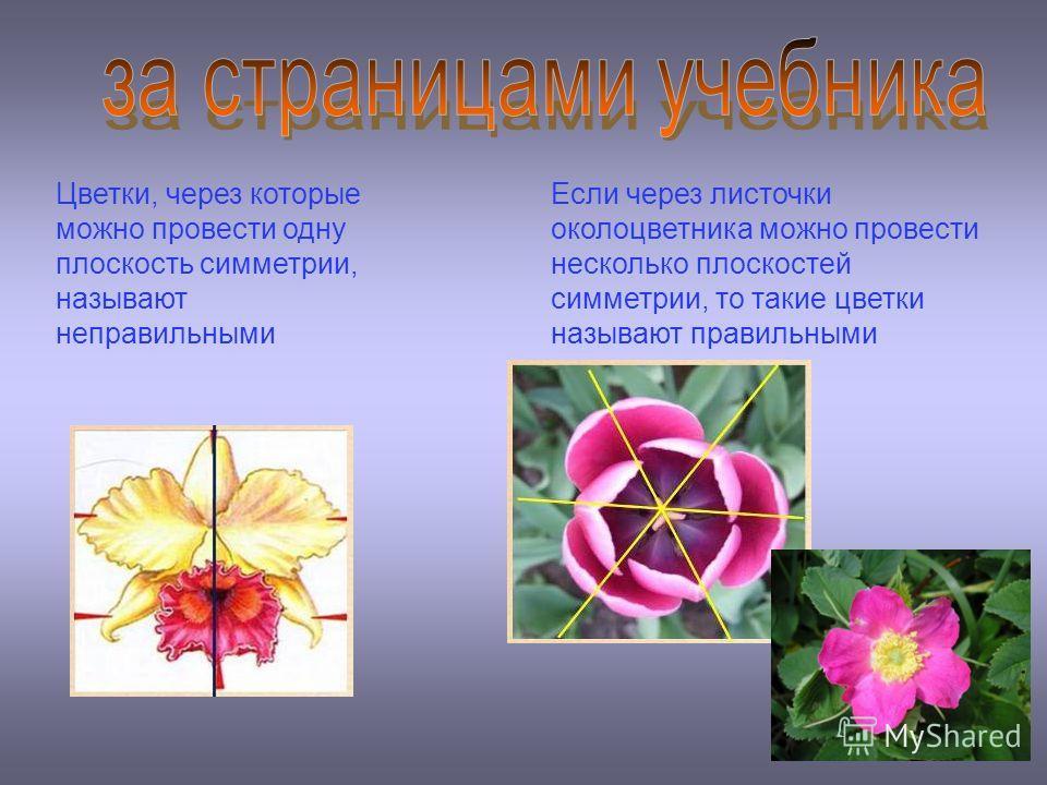 Цветки, через которые можно провести одну плоскость симметрии, называют неправильными Если через листочки околоцветника можно провести несколько плоскостей симметрии, то такие цветки называют правильными