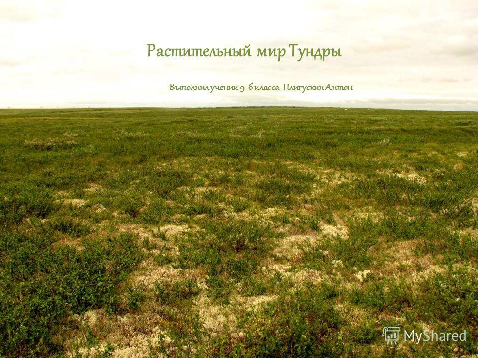 Растительный мир Тундры Выполнил ученик 9-б класса Плигускин Антон