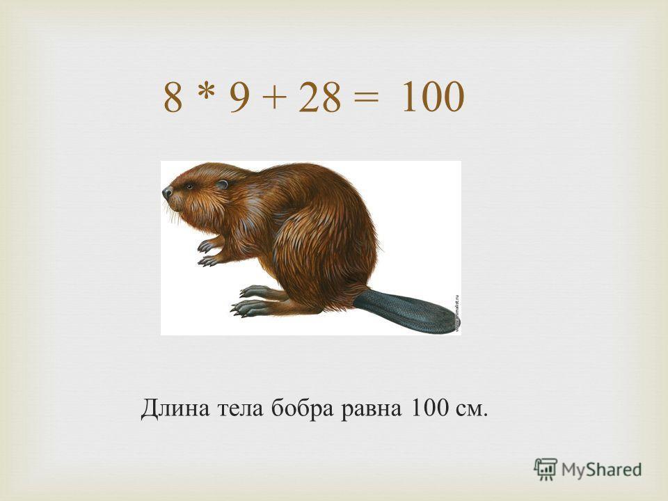 8 * 9 + 28 = Длина тела бобра равна 100 см. 100